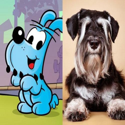 Schnauzer ou Scottish Terrier? Qual é a raça do Bidu na vida real