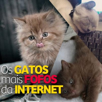 Os gatos mais fofos da internet