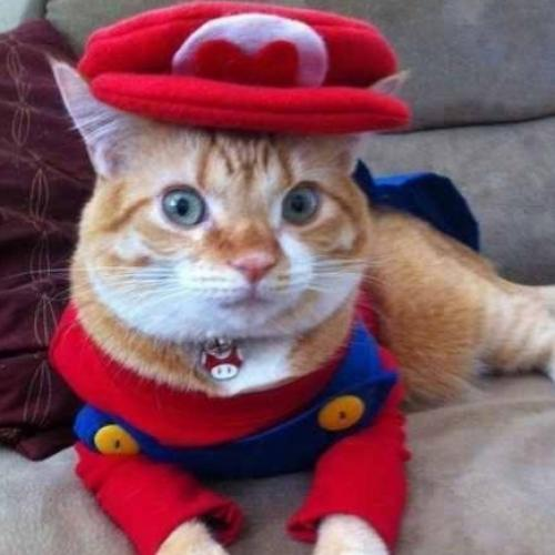 16 Gatos Fantasiados de Halloween!