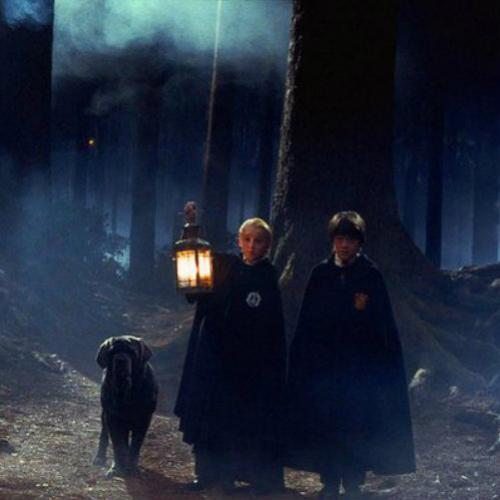 Floresta Proibida de Harry Potter pode se tornar real