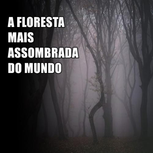 A floresta mais assombrada do mundo
