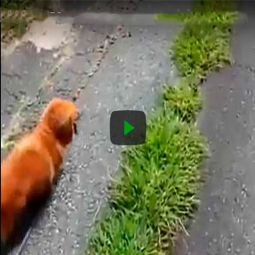 Dono do cachorro simula desmaio e a reação do animal é emocionante