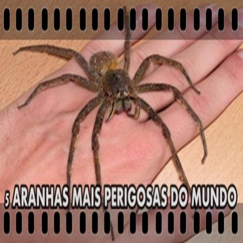 5 Aranhas mais perigosas e mortais do mundo!