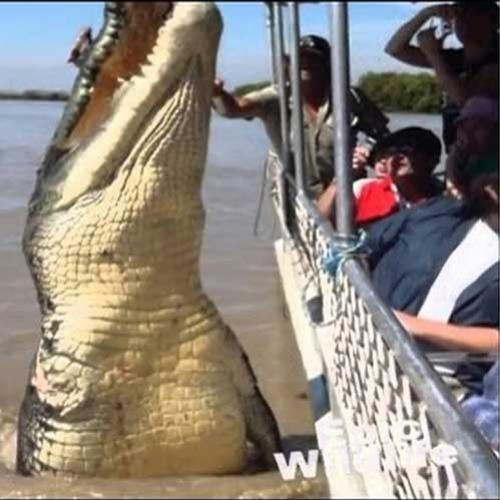 O maior crocodilo do mundo.